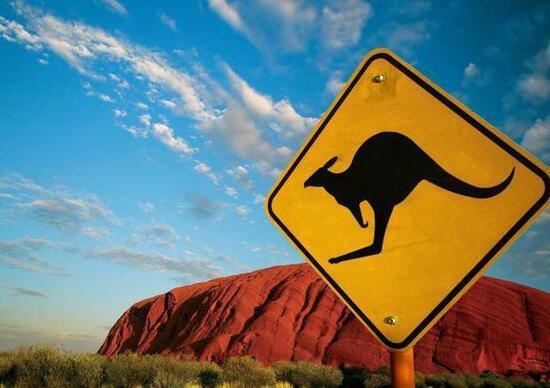 Guida autonoma in Australia, è allarme: non riconosce i canguri